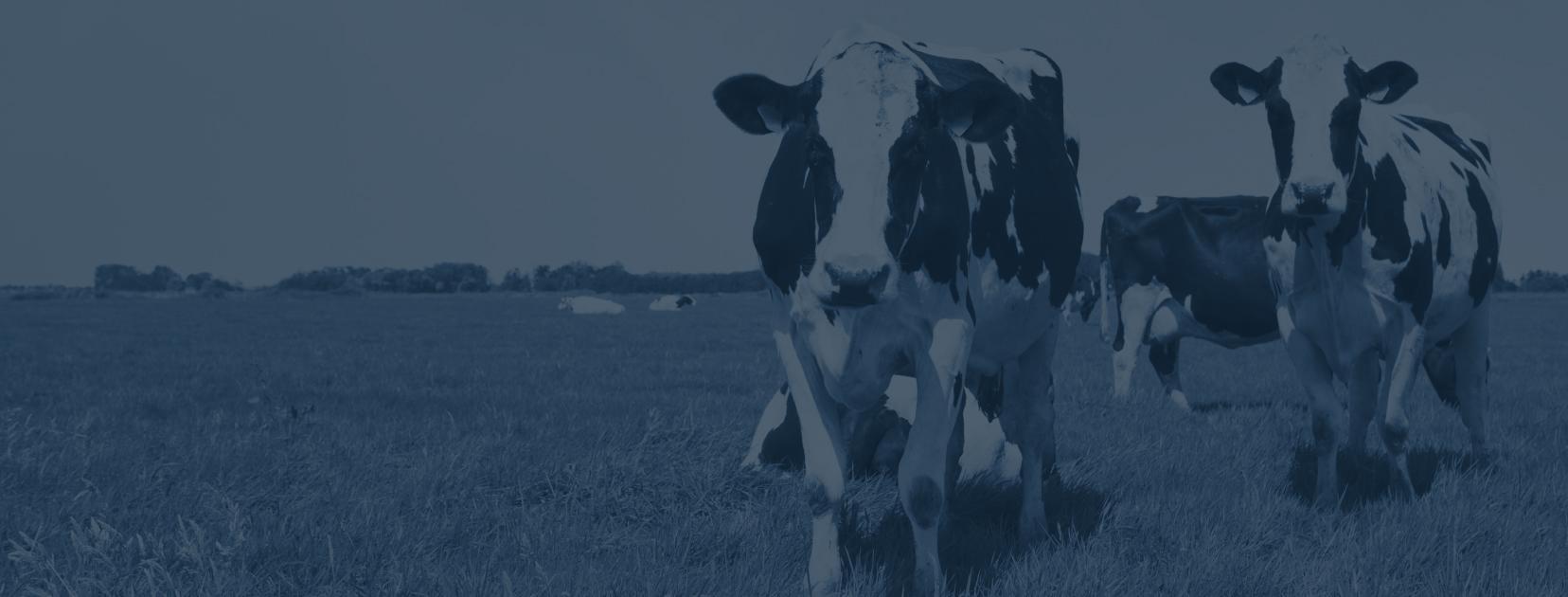 Delflandsevleesmeesters ★ 100% Duurzaam, natuurlijk vlees ★ Lokaal ★ Buitengewoon vlees uit Midden-Delflandse bodem ★ Bestel nu je favoriete vlees online!